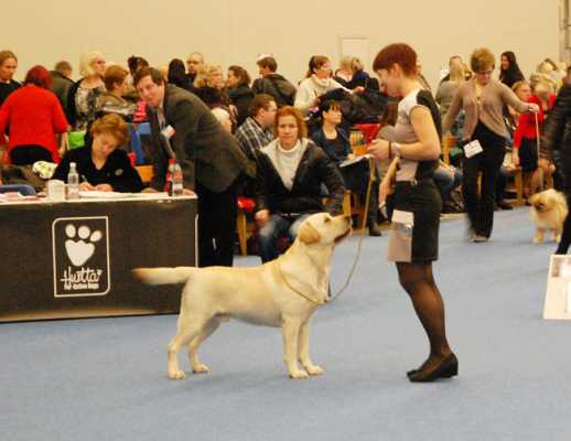 onegin cw open class finnish winner 2012.jpg